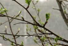 Photo of Ауа райы: Қазақстанның оңтүстігі мен батысында жаңбыр жауады