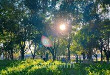 Photo of 29 шілдеде ел аумағының басым бөлігінде күн ашық болады