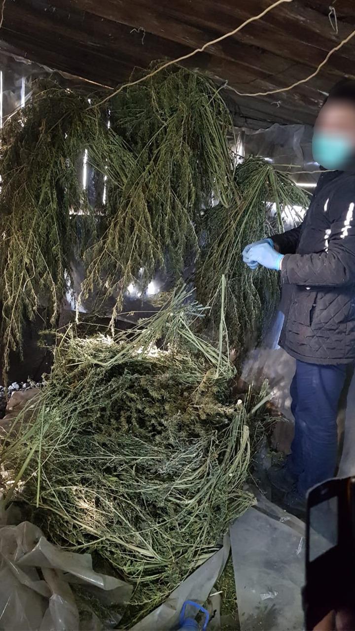 Коноплю изъяли полицейские игры выращивание конопли