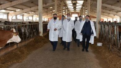 Photo of В регионе начата реализация 111 проектов по созданию мясных ферм