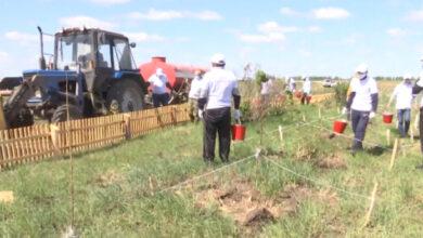 Photo of В районе аэропорта Кокшетау посажены тополи и акации