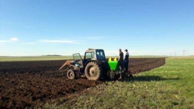 Photo of Четверо предпринимателей из города Степногорска, объединившись, внедряют проект «От поля до прилавка»