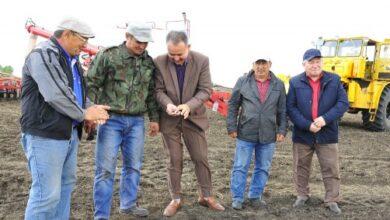 Photo of Хлеборобы Зерендинского района засеяли около половины посевных площадей