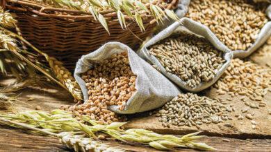 Photo of Жители Целиноградского района украли в ТОО 21 тонну зерна