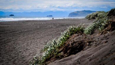 Photo of Массовая гибель морских животных произошла на Камчатке