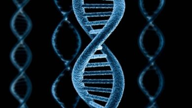 Photo of Ученые заявили о новой стадии эволюции человека
