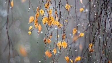Photo of Какая погода будет в Казахстане 11 октября