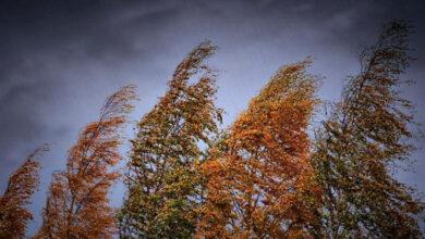Photo of Усиление ветра ожидается 6 октября