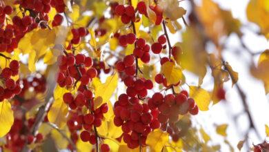 Photo of Какая погода будет 21 октября