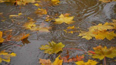 Photo of 7 ноября в Казахстане будет дождливым