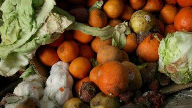 Photo of Гнилые овощи и кости вместо мяса: шокирующие фото из детдома прокомментировали в МОН РК