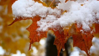 Photo of Какая погода ждет казахстанцев 4 ноября