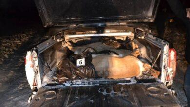 Photo of Четырех сибирских косуль отстрелили браконьеры в СКО