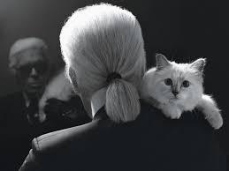 Photo of Хиджабы, костюмы, сапожки: дизайнер шьет стильную одежду для кошек – фото