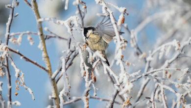 Photo of Декабрь 2020 года в Казахстане был самым холодным за последние 8 лет