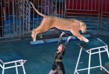 Photo of Отказ Шымкентского цирка от животных оказался экспериментом