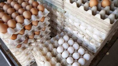 Photo of В казахстанских регионах яйца подорожали в два раза