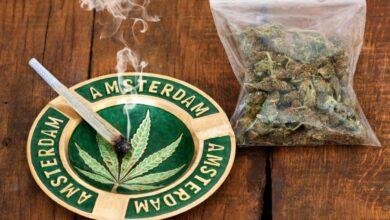 Photo of Власти Амстердама намерены запретить продажу наркотиков туристам