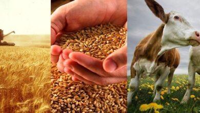Photo of Вопреки пандемии: сельское хозяйство показывает лучшие результаты за 10 лет