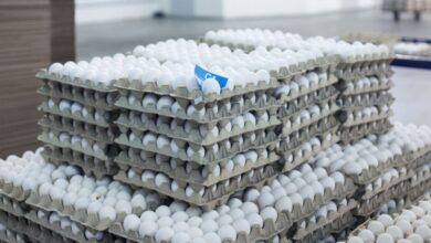 Photo of Цены на яйца выросли на 20% в Казахстане: в Минсельхозе назвали причину