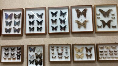 Photo of Бабочки со всего света собрались в Зеренде