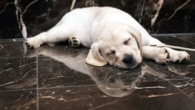 Photo of Собака получила $5 миллионов наследства от умершего хозяина