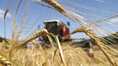 Photo of «Аграрный сектор вырос на 13 процентов – лучший показатель за декаду» – Маржикпаев