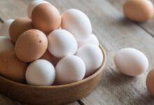 Photo of Яйца подешевели на 40 тенге в Акмолинской области