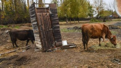 Photo of Сестра прыгнула вслед за братом: двое детей провалились в пятиметровый туалет в Туркестане