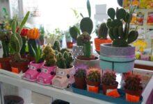 Photo of Магазин цветов и занятия джампингом: в Атбасарском районе реализуется программа «Енбек»