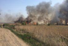 Photo of Горел камыш: пожар в Красном Яре потушили за час