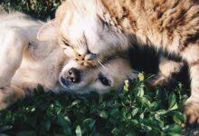 Photo of Собака и две кошки почти год провели в колодце и выжили – видео спасения