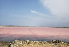 Photo of Об охране розового озера Кобейтуз высказался аким Акмолинской области