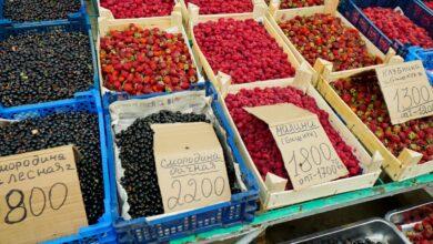 Photo of Повлияла ли засуха на «ягодный» бизнес в Акмолинской области