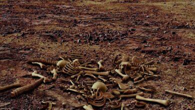 Photo of Глобальное потепление может привести к гибели миллионов человек