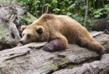 Photo of Вася, не надо! В Якутии храбрый кот защитил хозяев от медведя – видео