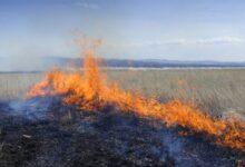 Photo of Степной пожар почти сутки тушили в Костанайской области
