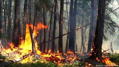 Photo of Пять лесных пожаров произошли за прошедшую неделю в Акмолинской области