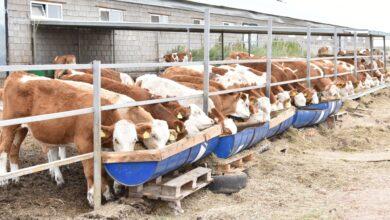 Photo of «Milk Produсt»: от «Турецкого айрана» до молочно-товарной фермы