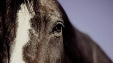 Photo of Лошадь стала причиной ДТП с полицейской машиной близ Экибастуза