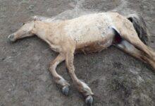 Photo of Замакима Мангистау ответил на вопрос о том, почему власти не предотвратили падеж скота