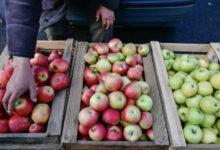 Photo of Как правильно выбрать и где дешевле купить осенние фрукты, рассказали казахстанские эксперты