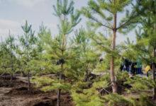 Photo of В Нур-Султане осенью планируют высадить полмиллиона деревьев