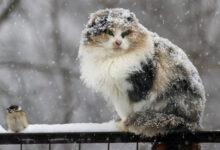 Photo of Первый снег выпал в Макинске