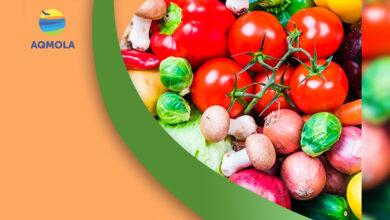 Photo of Продовольственная ярмарка пройдет 25 сентября в Кокшетау