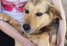 Photo of Суд в Бразилии признал за собаками право на компенсацию морального вреда