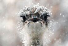 Photo of В Казахстане разводят африканских страусов