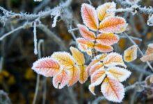 Photo of Морозы придут в Казахстан в ближайшие три дня