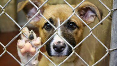 Photo of Почему щучинские волонтёры не откроют приют для животных?