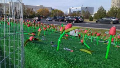 Photo of Пластиковые тюльпаны за 15 миллионов тенге в Актау начали разваливаться